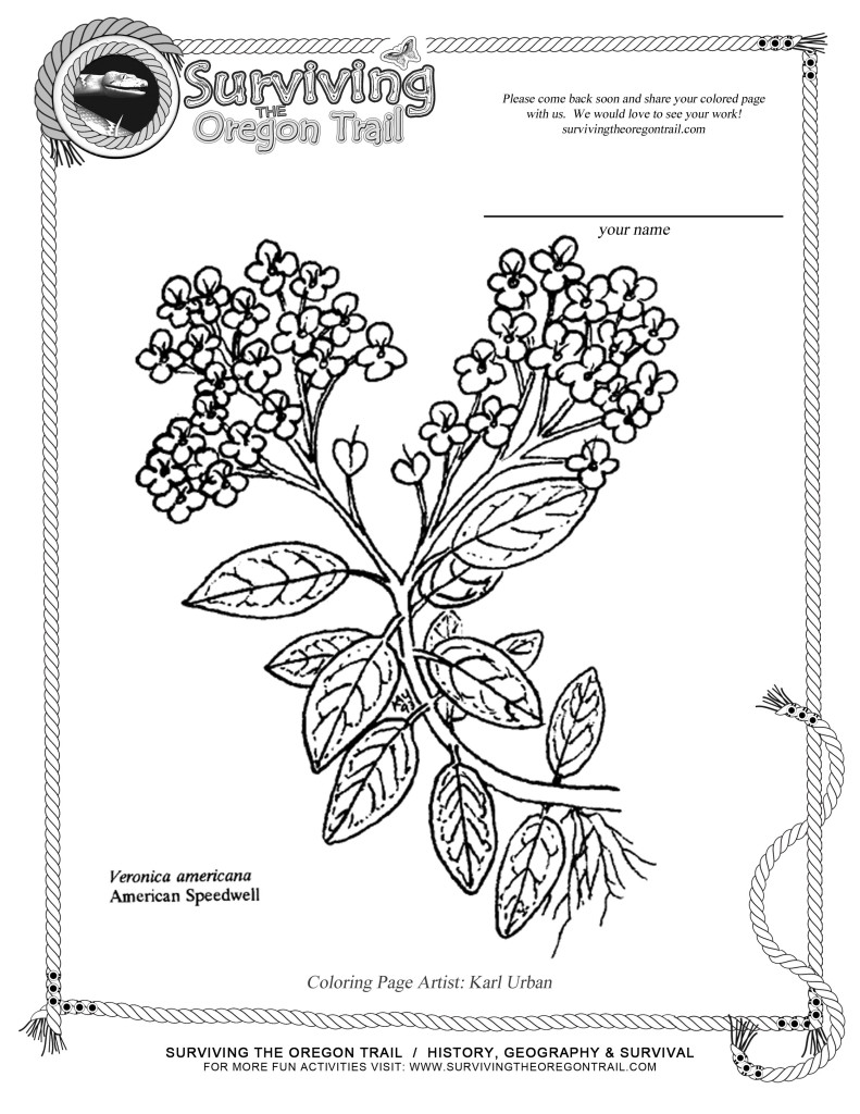 coloring pages oregon trail | Survival - Surviving the Oregon Trail