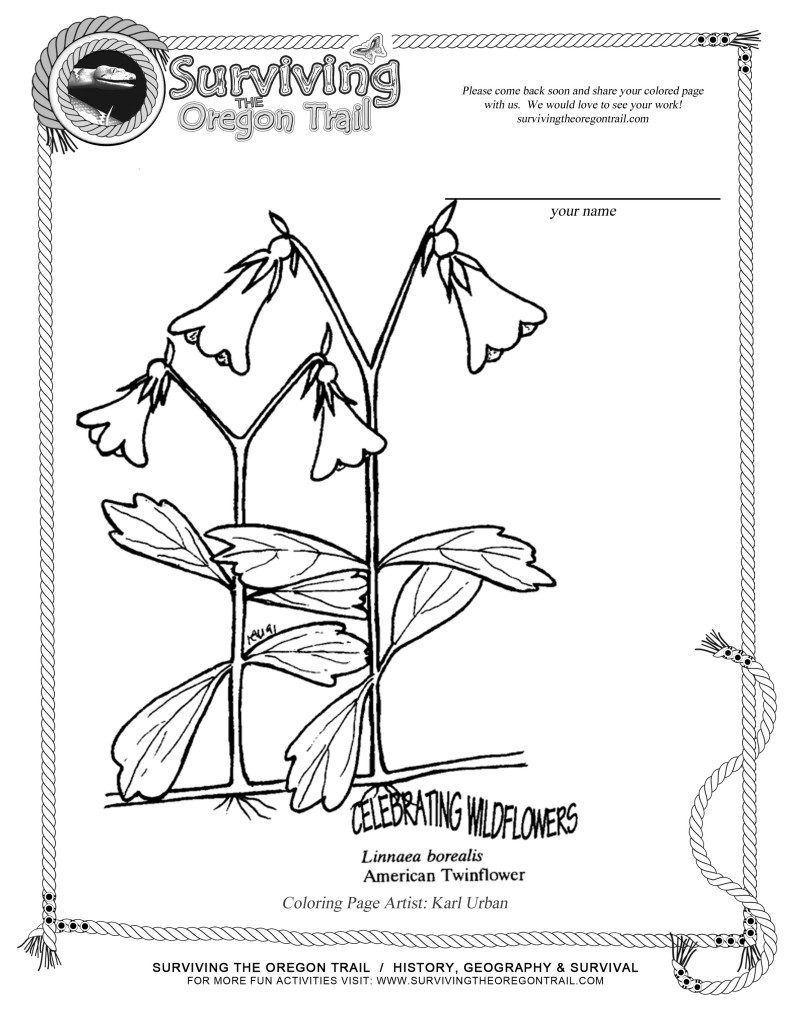 Free Coloring Page Flowers American Twin-flower - Surviving the ...