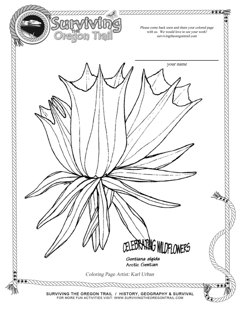 free coloring page flowers arctic gentian