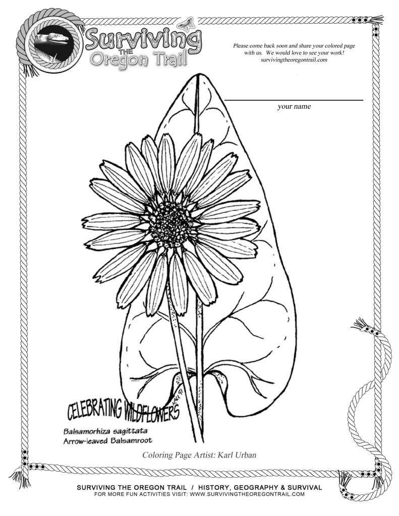 Free Coloring Page Flowers Arrow Leaved Balsamroot Surviving The